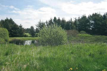 8550 großes Naturgrundstück am Ferienhaus Lökken