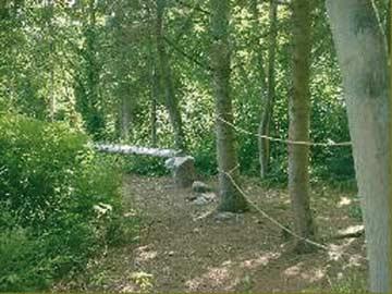 Wald mit Hindernisparcours