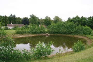 kleiner Teich im Außenbereich