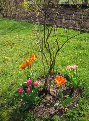 Blumen blühen im Garten