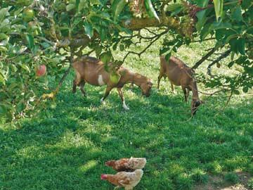 Tiere des Bauernhofes