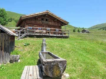 Skihütte Alpe Lusia im Sommer