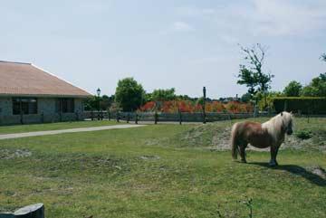 Pony auf der Wiese am Gruppenhaus auf Texel