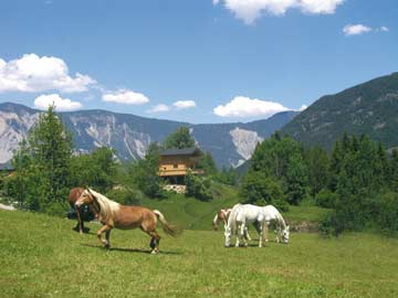 Sommridylle in Tirol