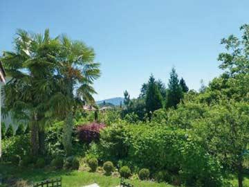 Herrlicher Garten mit Palmen direkt am Ferienhaus im Malcantone